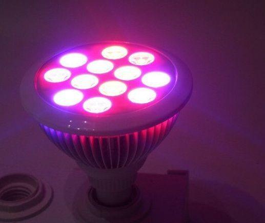 Synergy 21 LED Flora Line Retrofit E27 12W, Pflanzenlampe